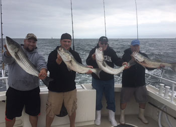 On an cloudy, overcast day, 4 men, each wearing a sweatshirt and baseball cap, hold up the striped bass they caught.