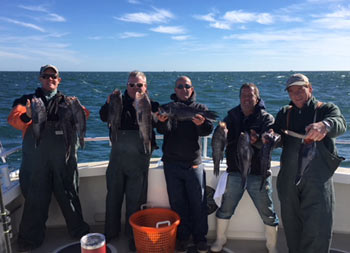 On a sunny, blue sky, crispy day, 5 men each hold up 2 sea bass for the camera.